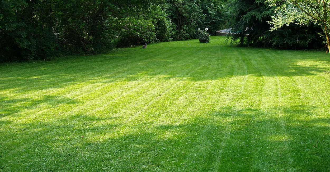 midland home lawn care