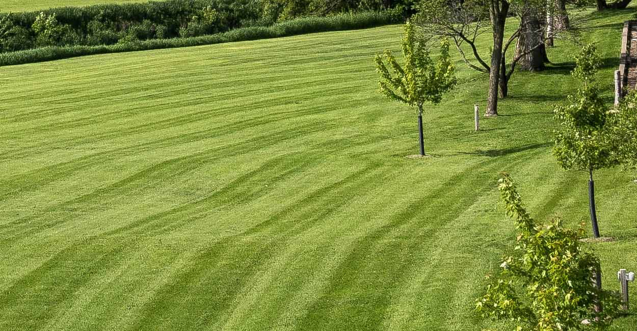 Midland Michigan Lawn Services